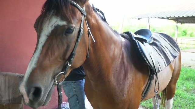 stockvideo's en b-roll-footage met mannelijke medic behandeling van een paard en knuffel paard - aaien