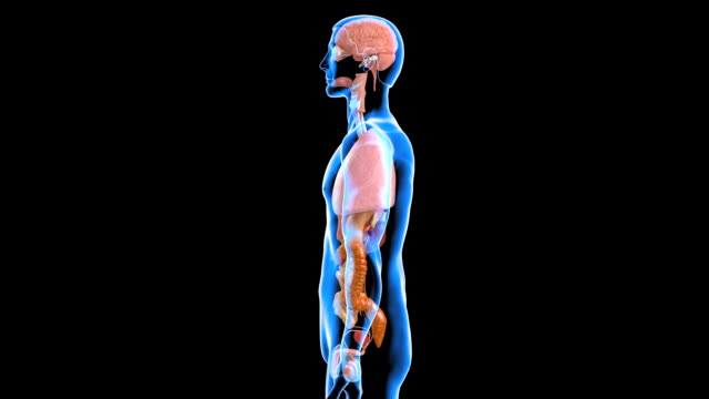 male organs - figura maschile video stock e b–roll