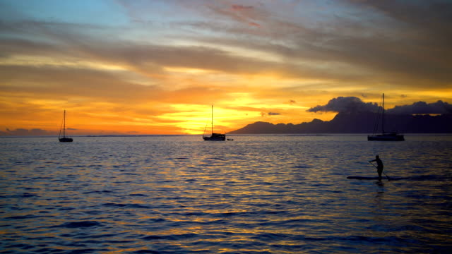 male paddle boarding at sunset moorea pacific ocean - south pacific ocean stock-videos und b-roll-filmmaterial