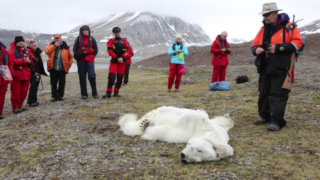 a male polar bear (ursus maritimus) starved to death as a consequence of climate change. this clip shows international polar bear scientist, ian stirling explaining how the bear died. - climate scientist stock videos & royalty-free footage