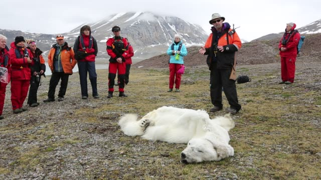 male polar bear starved to death in all likelihood as a consequence of climate change. this male polar bear was last tracked by the norwegian polar... - male animal stock videos & royalty-free footage