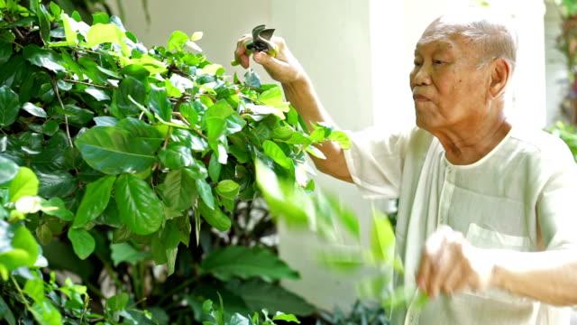 Male Senior Pruning Leaf. Old Man Hobby.