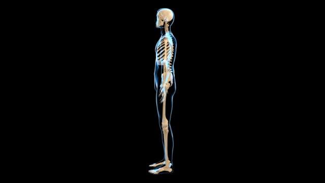 male skeletal system - knochen im beckenbereich stock-videos und b-roll-filmmaterial