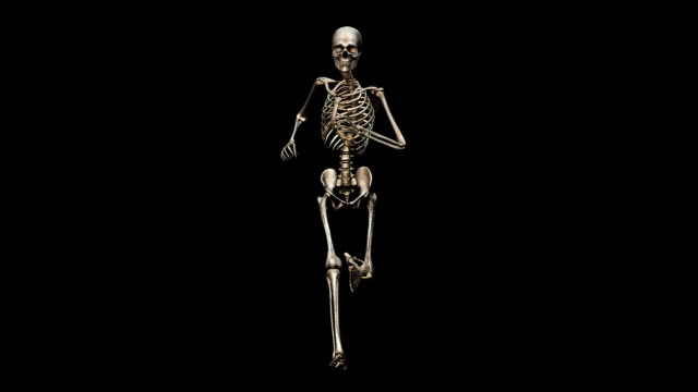 """Male skeleton, running"""