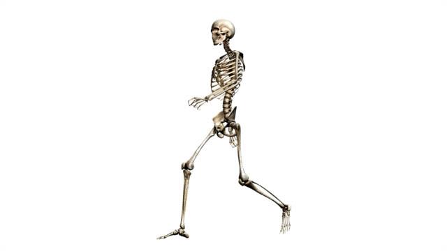 """""""male skeleton, walking"""" - menschliches skelett stock-videos und b-roll-filmmaterial"""