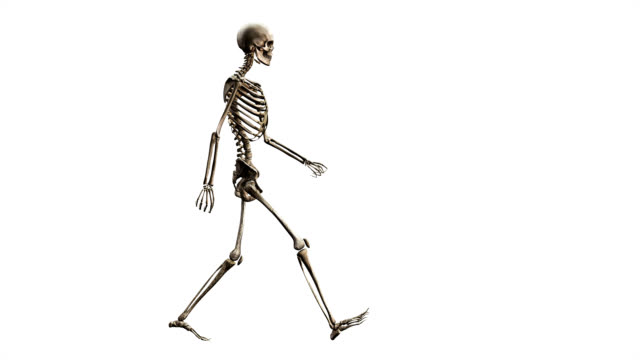 'Male skeleton, walking'