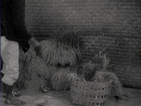 vídeos de stock, filmes e b-roll de male spreading a rat plague by transporting rice with fleas - praga