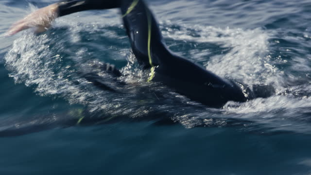 vídeos de stock, filmes e b-roll de nadador masculino ts rastreamento frente a nadar no mar - triatleta