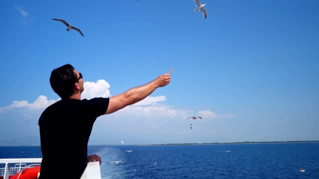 male tourist feeding seagulls in flight - seagull stock videos & royalty-free footage
