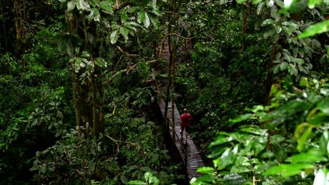 熱帯雨林の遊歩道で男性観光客ハイキング - サラワク州点の映像素材/bロール