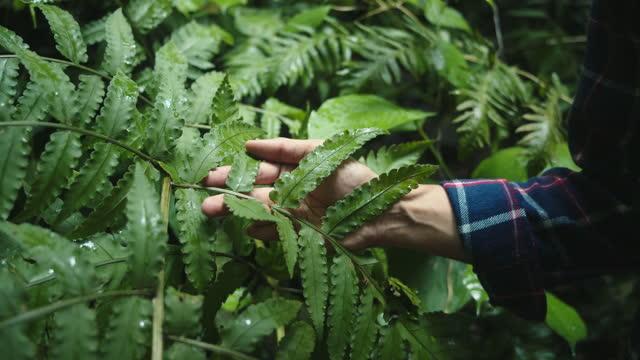 male traveler walking through the forest. - wonderlust stock videos & royalty-free footage