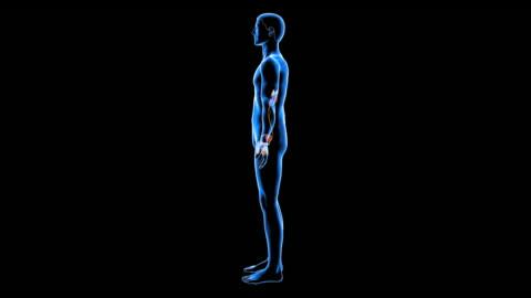 male urinary system - harnapparat stock-videos und b-roll-filmmaterial