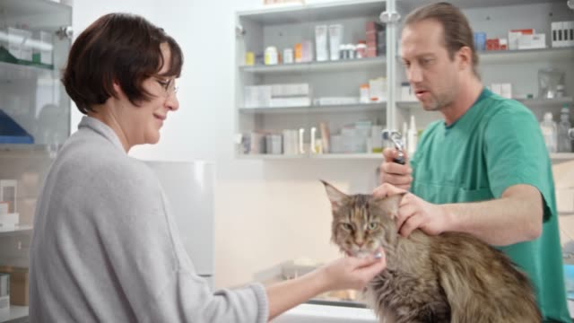 Male vet checking the cat's ears in the exam room and talking to it's female owner