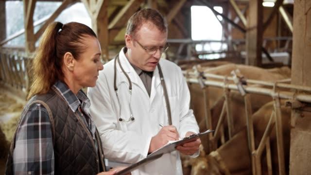 vidéos et rushes de mâle vétérinaire conseille agricultrice sur la santé de ses vaches, telles qu'elles existent dans la grange - medium group of animals