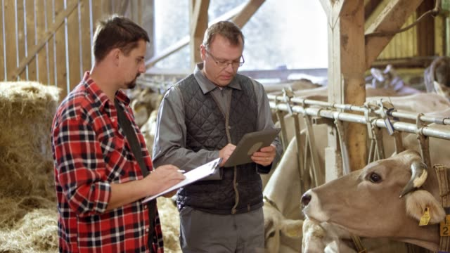 male veterinarian advising a male farmer about the cattle feed as they stand in the barn - produttore video stock e b–roll