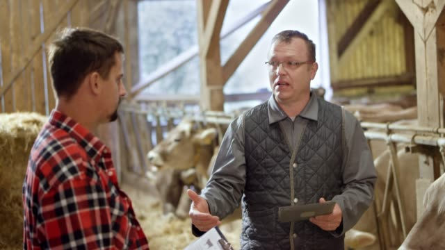 male veterinarian talking to the young male farmer in the barn standing next to the cattle - livestock stock videos & royalty-free footage