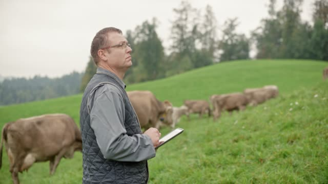 male veterinarian using a tablet to make notes while observing the cattle in the pasture - cattle stock videos & royalty-free footage