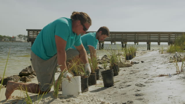 male volunteers plant grass on beach in florida, low angle - gulf coast states stock-videos und b-roll-filmmaterial