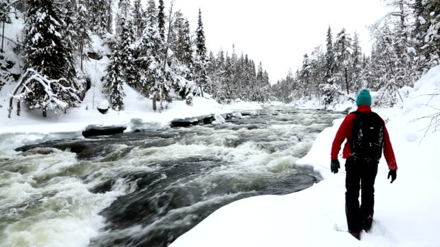 male walker by river snowy spruce forest oulanka nat pk  finland - spruce stock videos & royalty-free footage