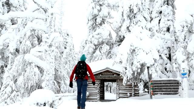 male walker riisitunturi np snowy frozen lapland finland  - spruce stock videos & royalty-free footage