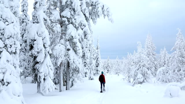 vídeos de stock, filmes e b-roll de male walker snow shoes riisitunturi np spruces covered with tykky finland - peter snow