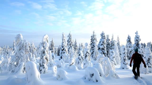 vídeos de stock, filmes e b-roll de male walker wearing snow shoes riisitunturi np tykky lapland finland - peter snow