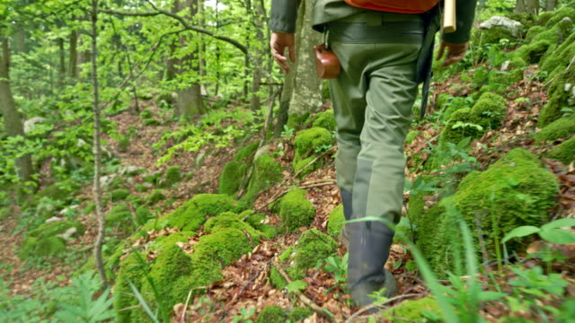 ts male wilderness survival specialist walking in the forest - stivale video stock e b–roll