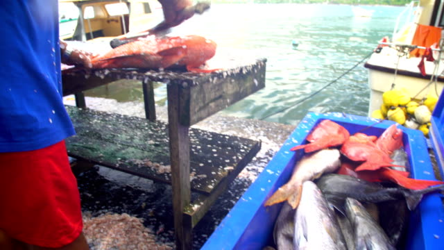 males preparing fish for market nuku hiva marquesas - scaly stock videos & royalty-free footage