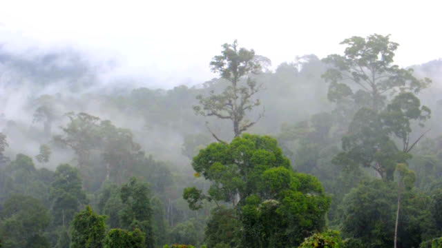 Maliau Basin rainforest