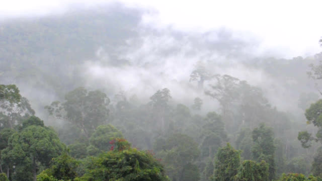 maliau basin rainforest - malaysia stock videos & royalty-free footage
