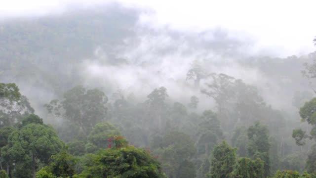 Maliau Basin rainforest