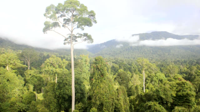 maliau basin rainforest - rainforest stock videos & royalty-free footage