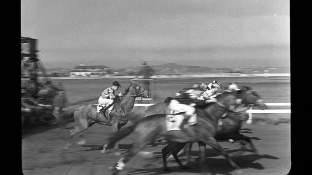 malicious and other horses let to the starting gate at tanforan racetrack, race starts as horses are let out of the gate. - hooved animal stock videos & royalty-free footage
