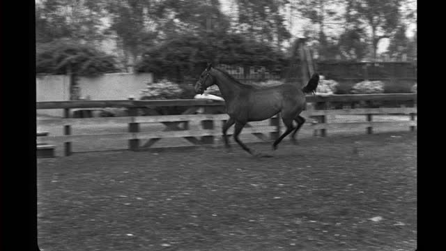 malicious at his stables, working out with his trainer. - hooved animal stock videos & royalty-free footage