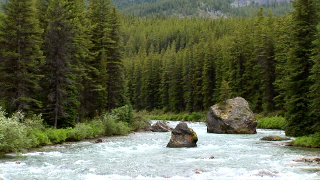 maligne river, jasper national park, alberta, canada - maligne river stock videos & royalty-free footage