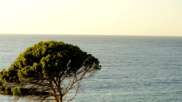 HD: Maiorca north shore ao pôr do sol. Rolamento.