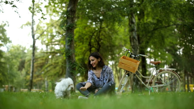 maltese dog and woman in the park - hamper stock videos and b-roll footage