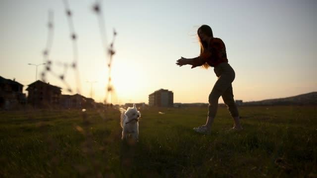Maltesisches Hundespringen und Haltung von Händen des Besitzern