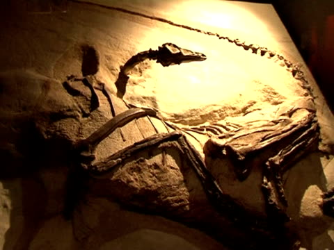 Mammals and dinosaurs one species profited from the other's decline Paris Paris France