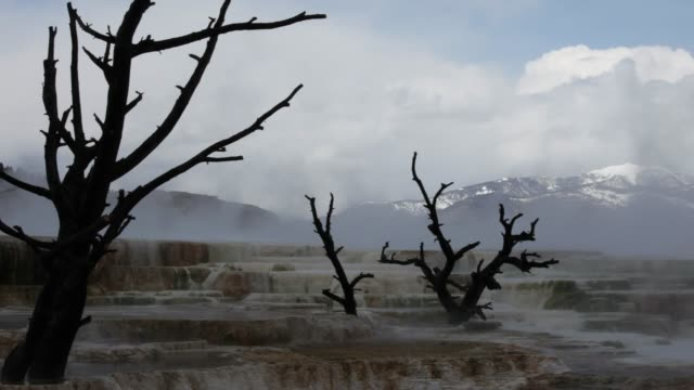 mammoth springs - extinct stock videos and b-roll footage