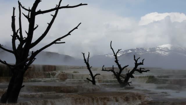 mammoth springs - extinct stock videos & royalty-free footage