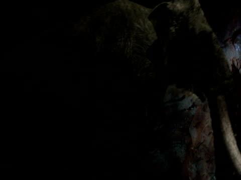 vídeos de stock, filmes e b-roll de mammoth walks past in cave, usa - grotto cave