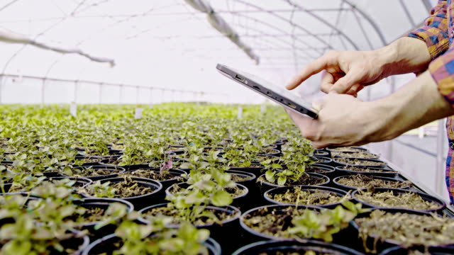 ds ms man analyzing flower growth in the greenhouse with a tablet - greenhouse stock videos & royalty-free footage