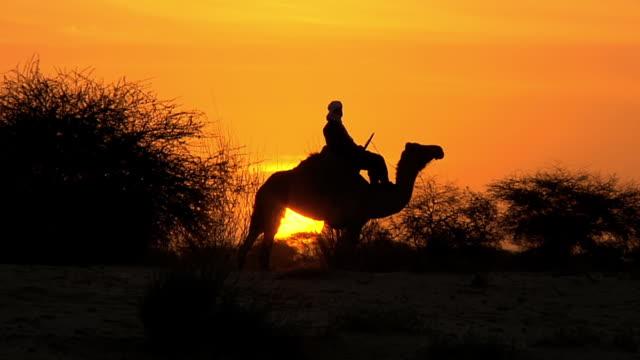 WS Man and camel moving at Sunset at Sahara Desert / Southern edge of the Sahara Desert Timbuktu Mali