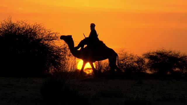 ws man and camel moving at sunset at sahara desert / southern edge of the sahara desert timbuktu mali - sahara desert stock videos & royalty-free footage
