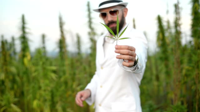 Man and cannabis.