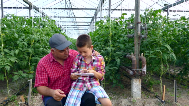 4K Man and child using digital tablet in greenhouse
