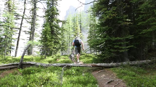 man and dog hike forest trail - footpath stock videos & royalty-free footage
