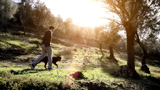 SERIES: Man and dog in olive grove