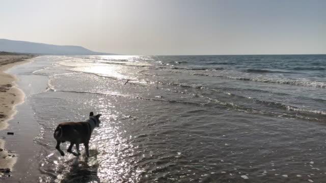 ms pov mann und hund spielen holen am sonnigen meer strand, apulien, italien - stab stock-videos und b-roll-filmmaterial